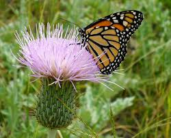 Gardening for Butterflies in Round Rock - Stephen Brueggerhoff