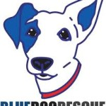 Blue Dog Rescue